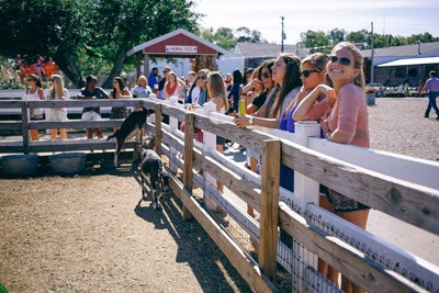 Sorority group feeding animals at Wiard's Orchards.