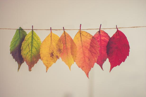 Fall leaves hanging on a string.