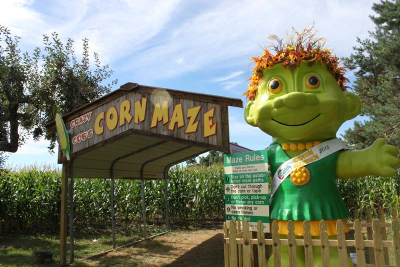 Wiard's Orchards Corn Maze Entrance.