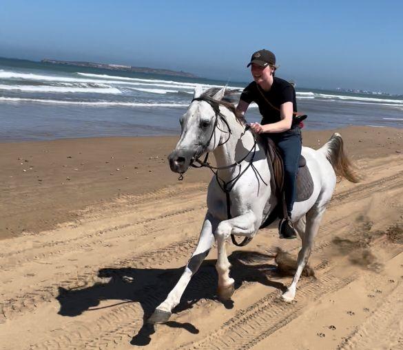 galloping white stallion on essaouira beach morocco horse riding holiday