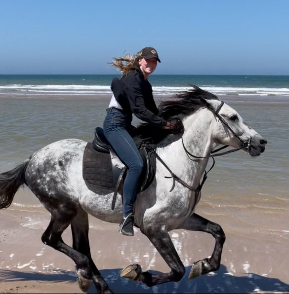 galloping grey horse on essaouira beach morocco horse riding holiday