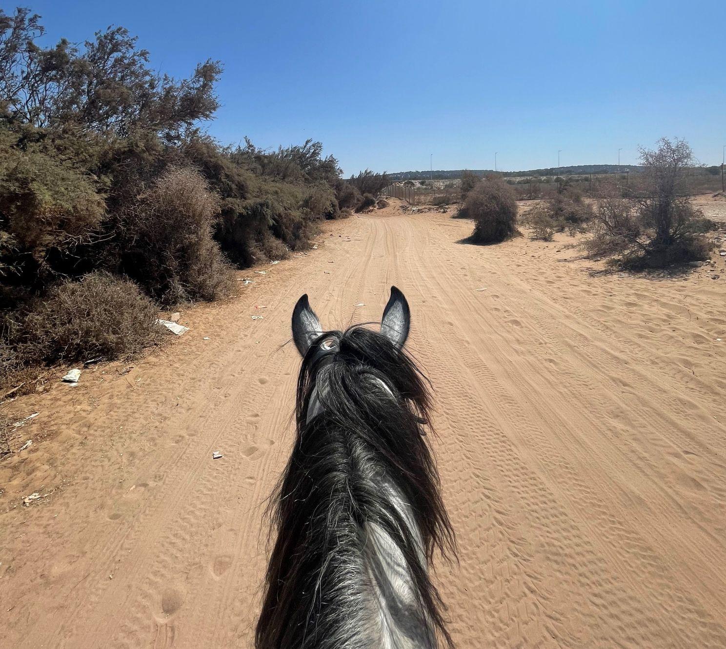 horse riding morocco essaouira yassine cavalier