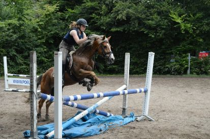 Showjumping with welsh pony