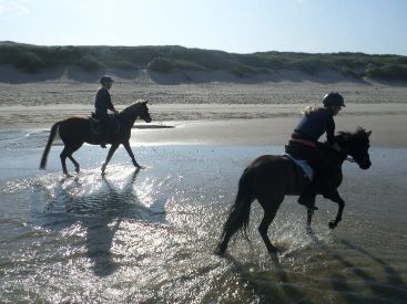 Riding on the beach in the netherlands