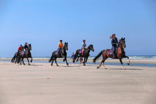 Beach ride on friesians terschelling the netherlands