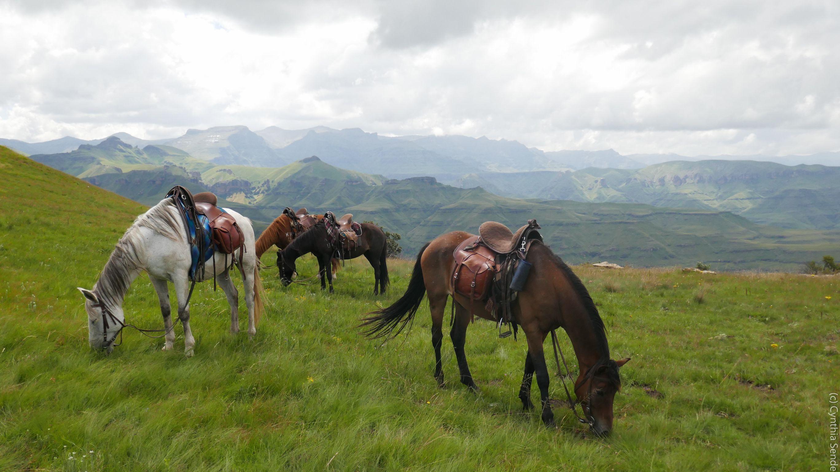 Horses grazing in the drakensberg south africa