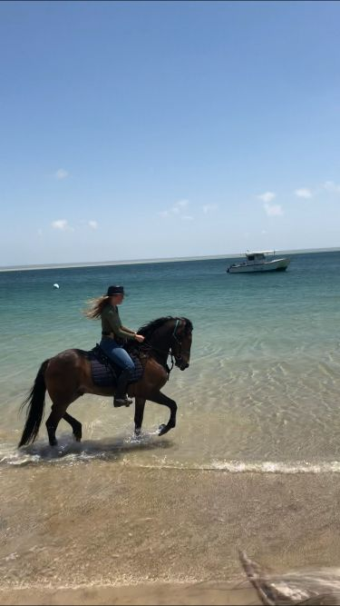 horse riding with a friesian on the beach in mozambique
