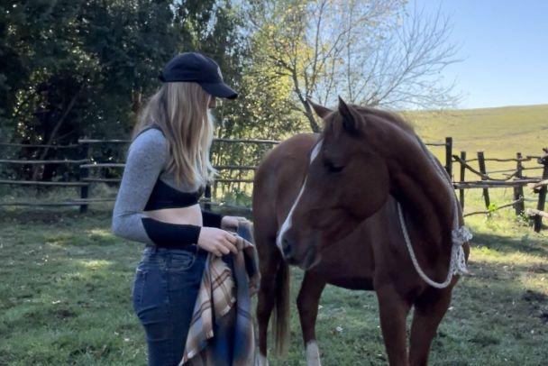 training arabian horse in south africa