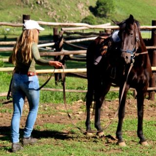training thoroughbred horse in south africa