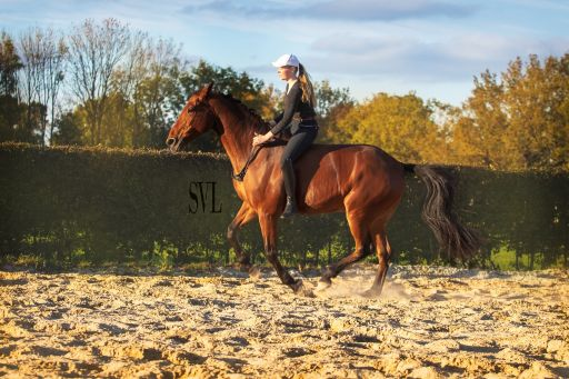 tackless horse riding on KWPN horse