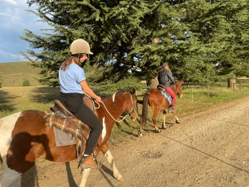 Horse riding on young horses in south africa