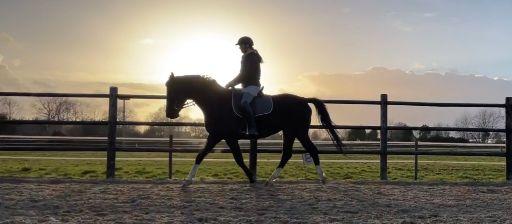 dressage horse riding on black KWPN horse during sunset