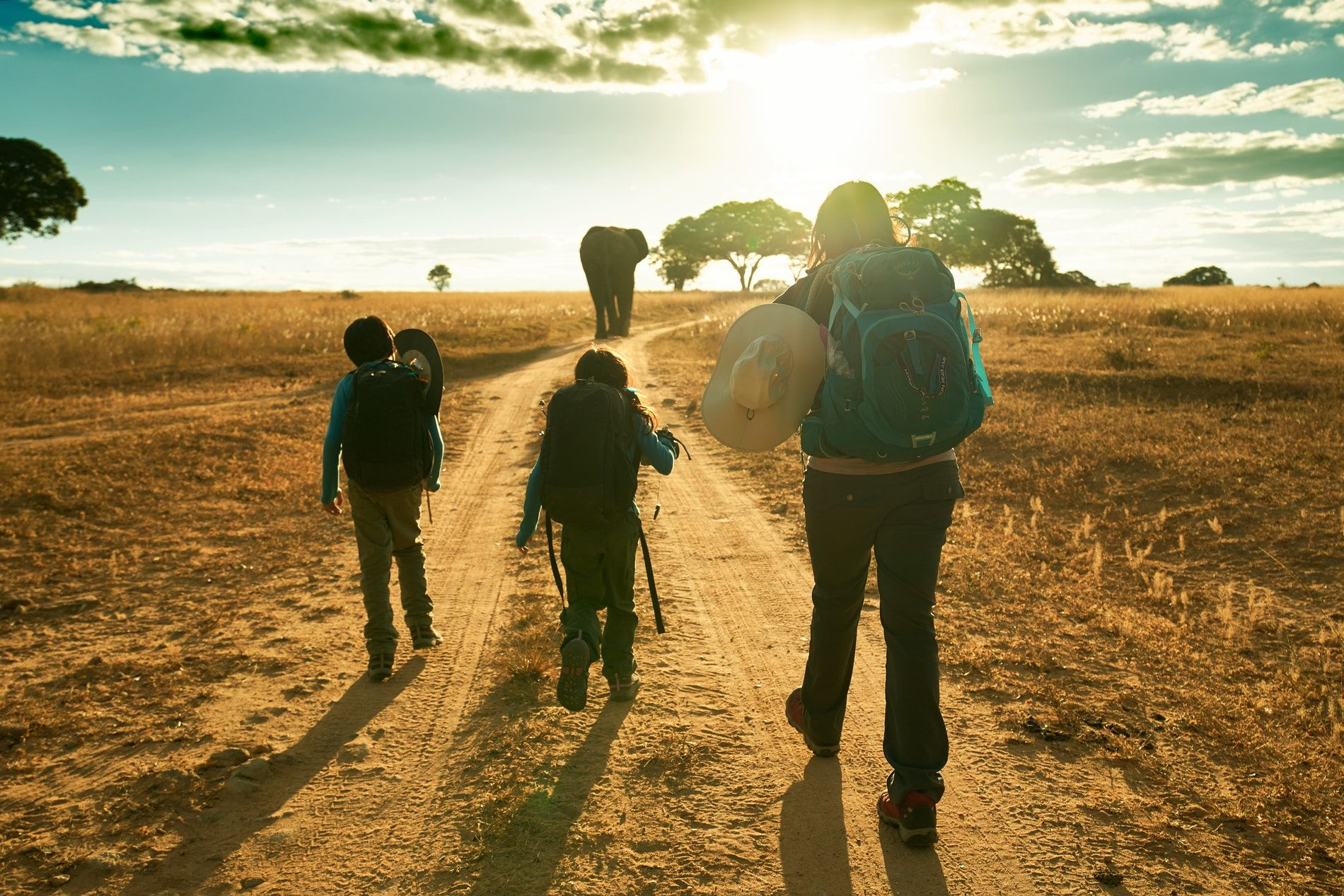 volunteers walking with elephant in zimbabwe during sunset