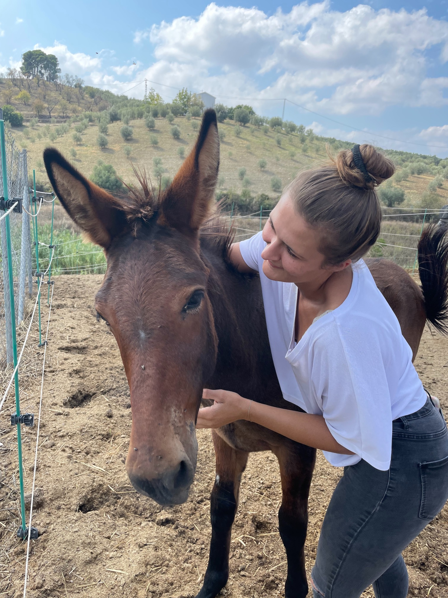 Cuddling a young mule at a horse riding destination in andalusia spain