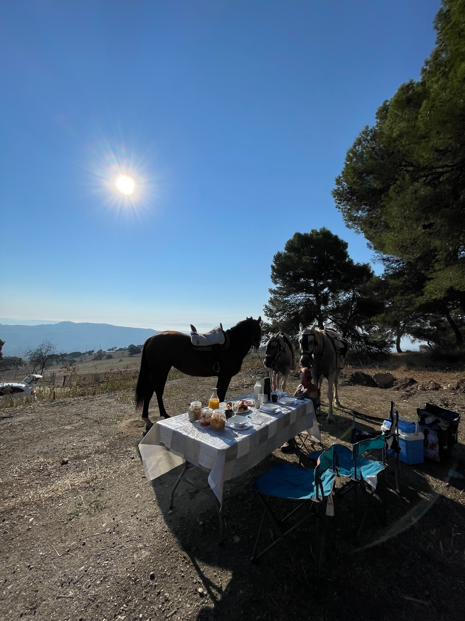 picnic with the horses in andalucia spain