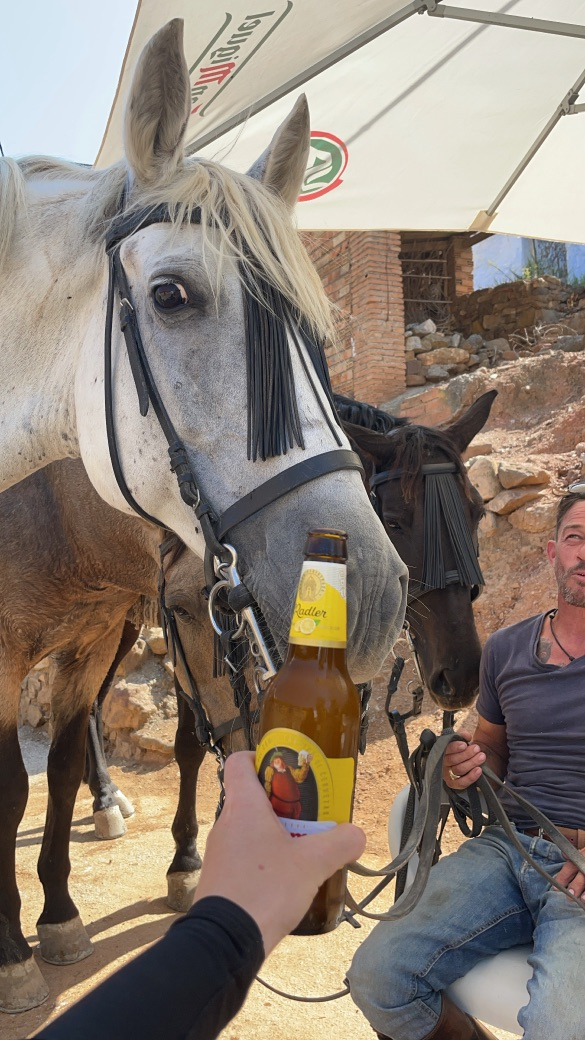 Horses at a local bar in andalusia spain