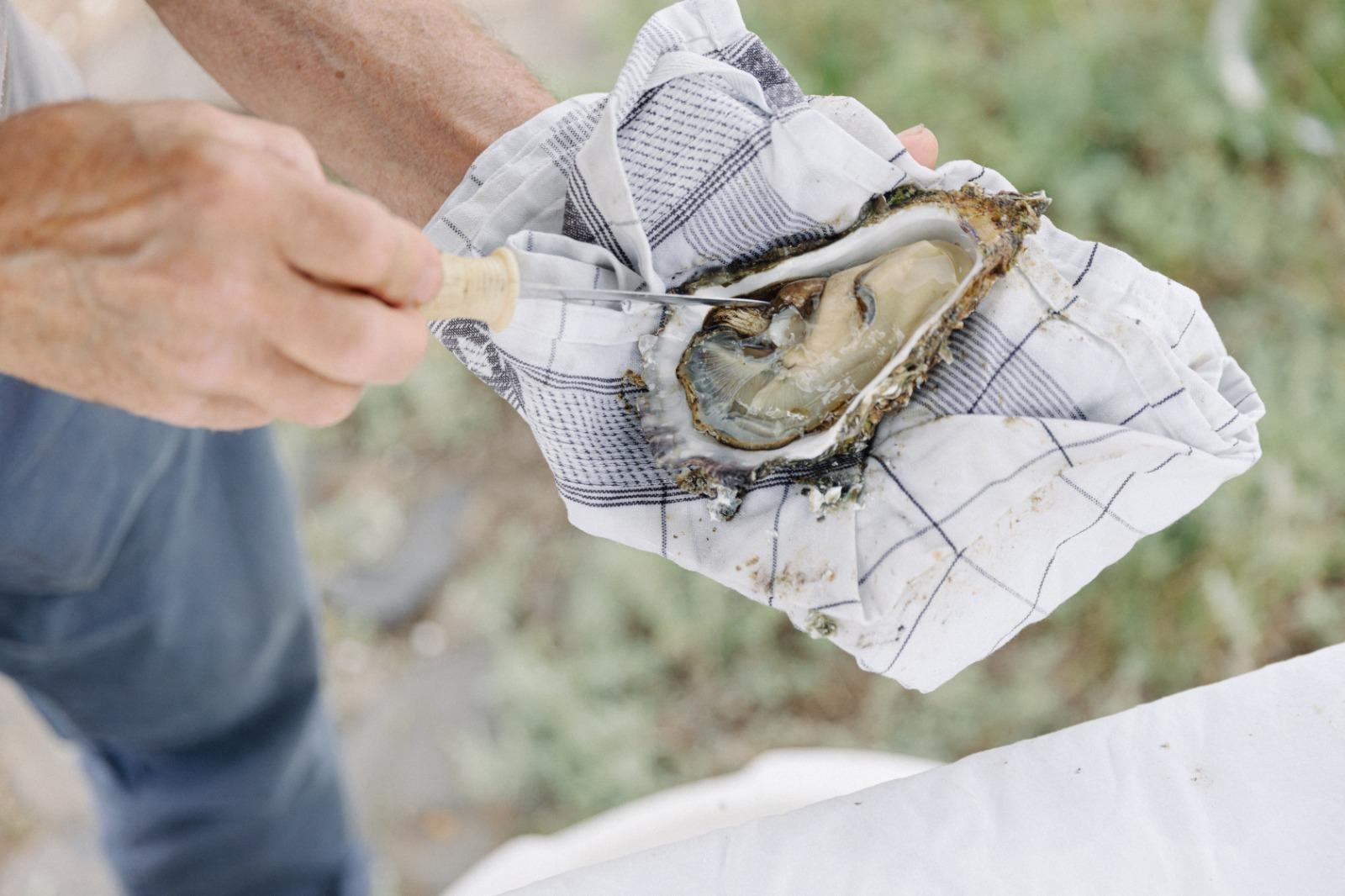 Oester die net is open gemaakt en ligt in een hand met daarop een blauw witte theedoek.