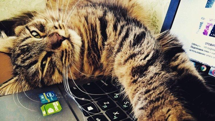 cat-2374290_1280