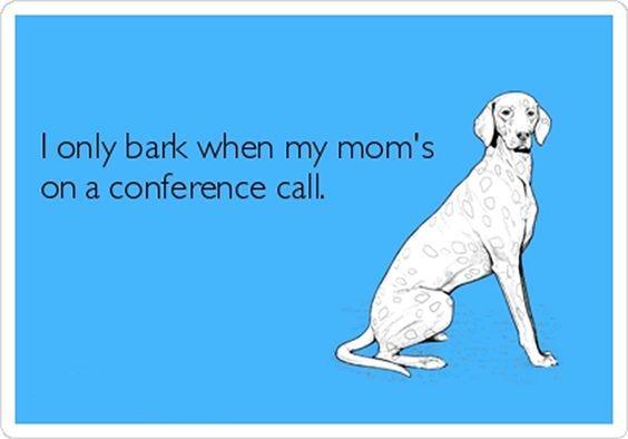 blog 6 ecard dog