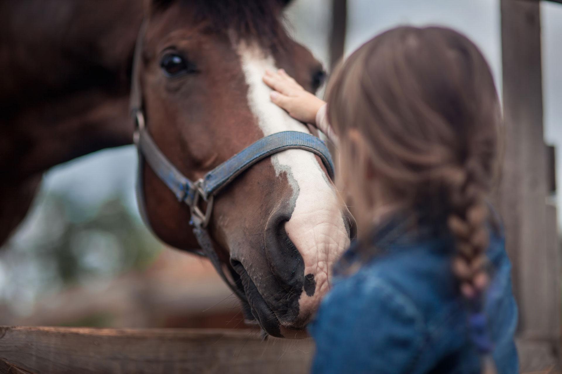 Energie der Pferde