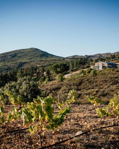 View of Platteklip Vineyards