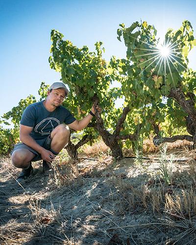 Johan Meyer next to his Platteklip Vineyards vines
