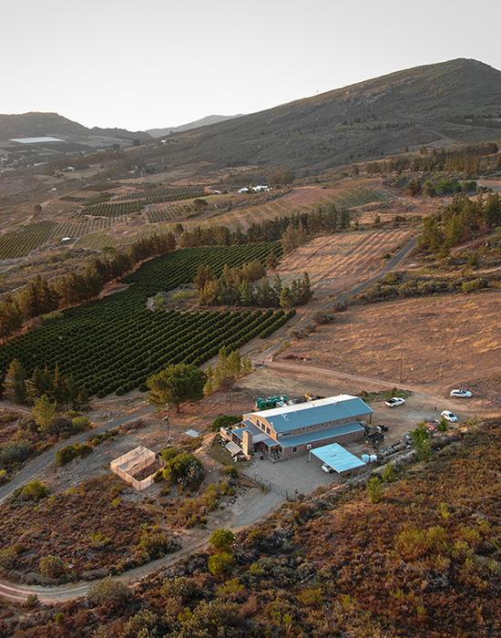 Platteklip Vineyards in the Piket-Bo-Berg region in South Africa