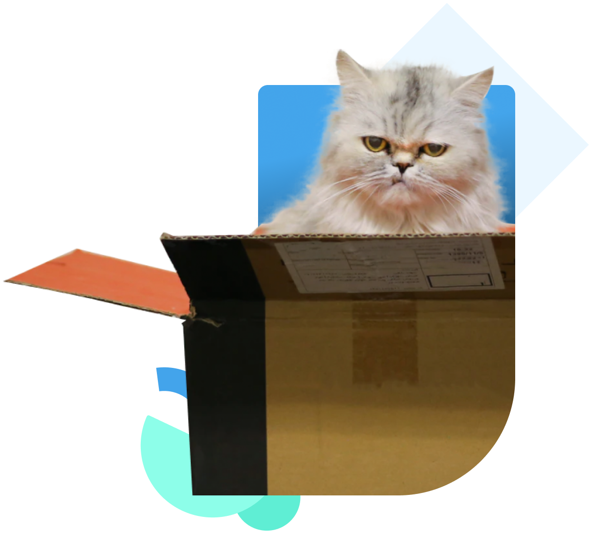 Photo of a cat popping out of a box
