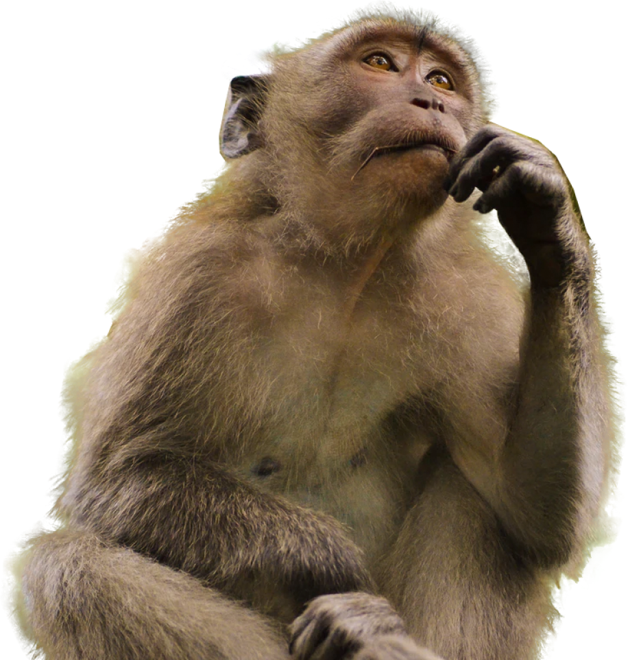 Photo of a monkey pondering the meaning of life