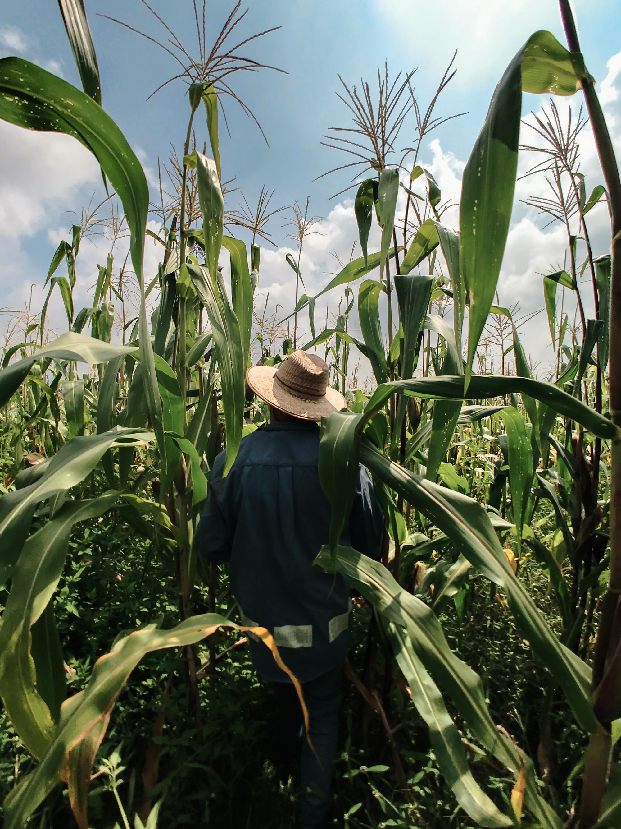 How to Create Better Post-COVID Food Systems: 4 Action Steps For Environmentalists