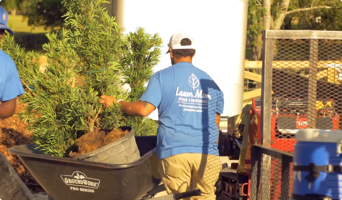 Man in a LawnMore shirt delivering a plant in a wheelbarrow