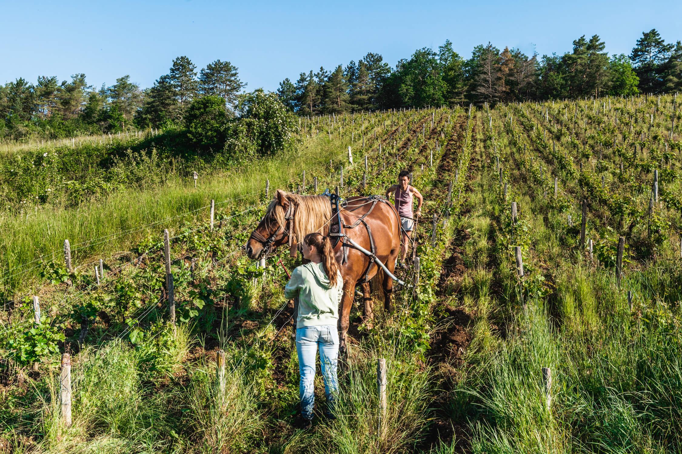 Celine Cote organic wine grower in Burgundy