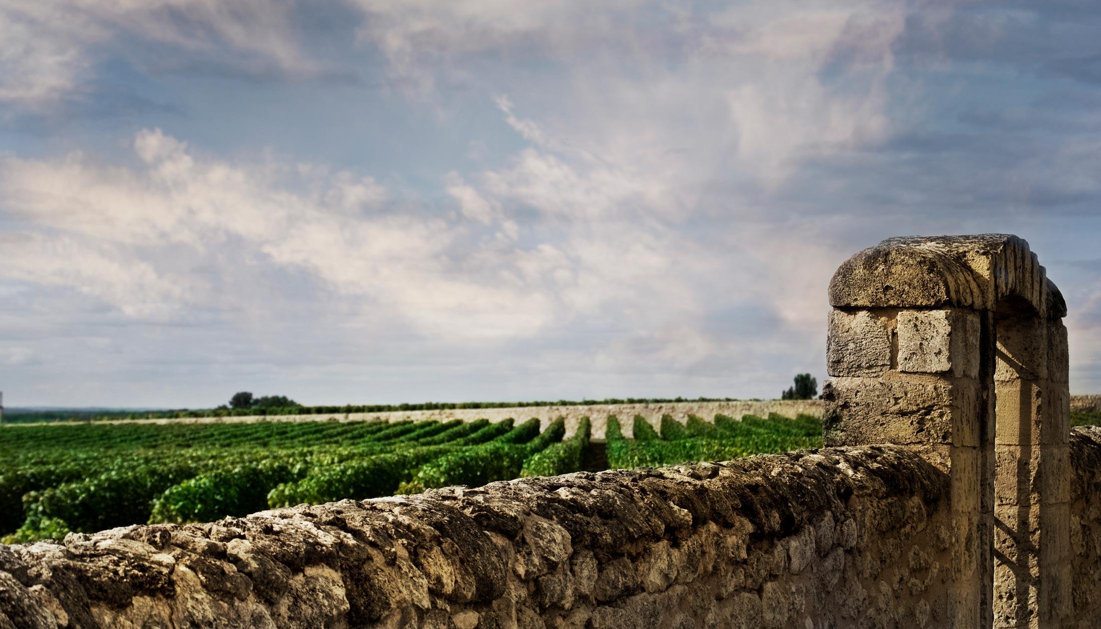 The History Of Burgundy Wine