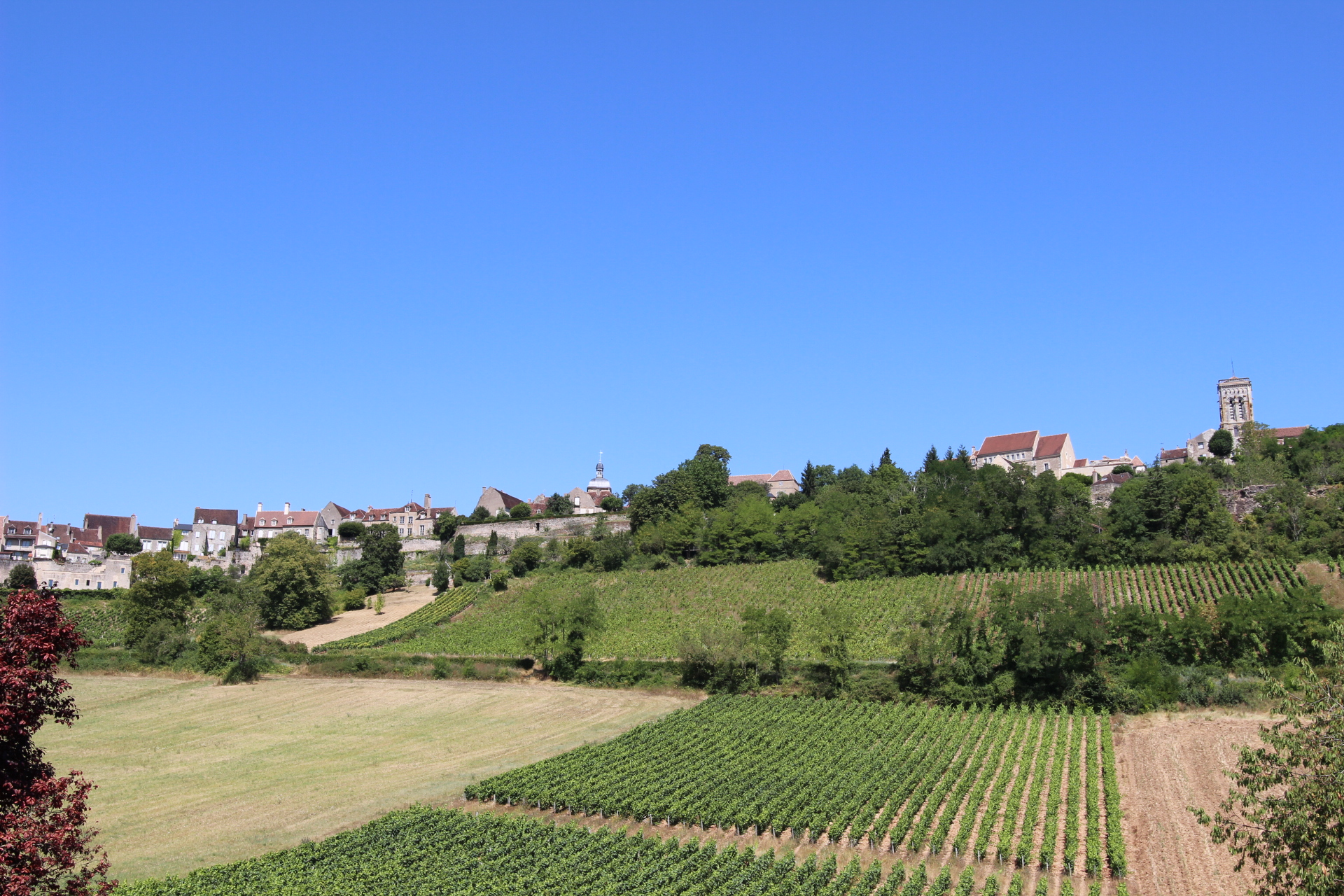 The rebirth of the wines of Vézelay