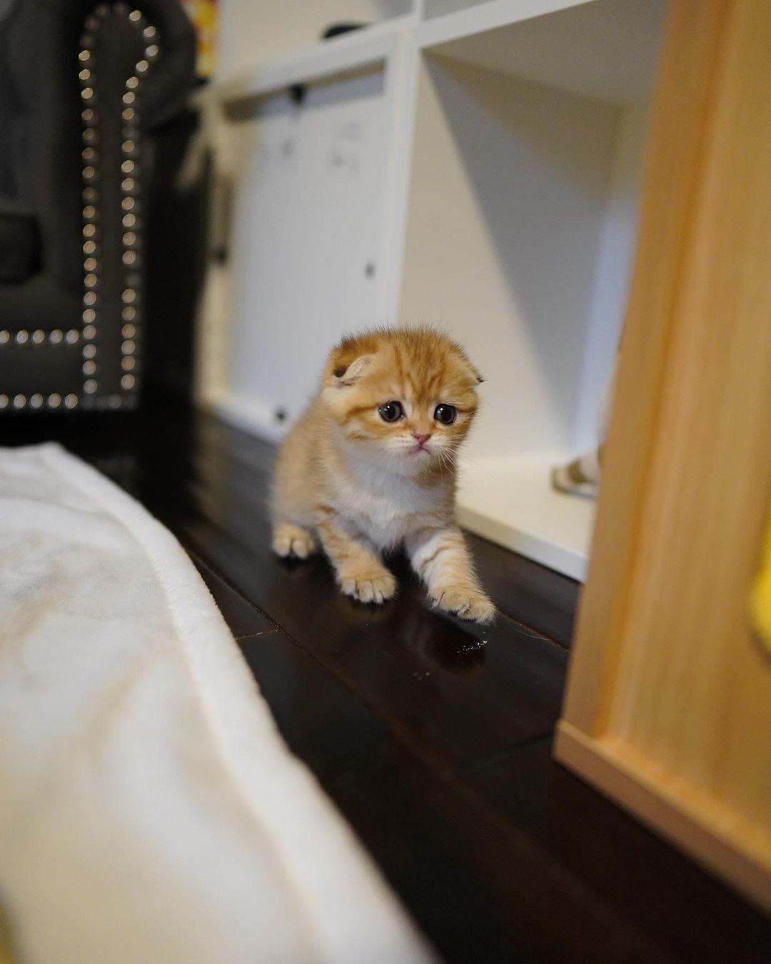 kittens, for, sale