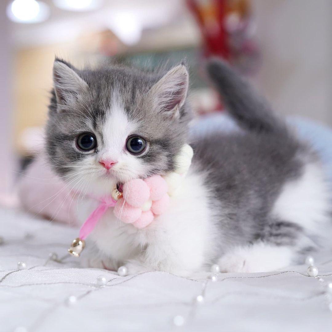 , kittens, for, sale