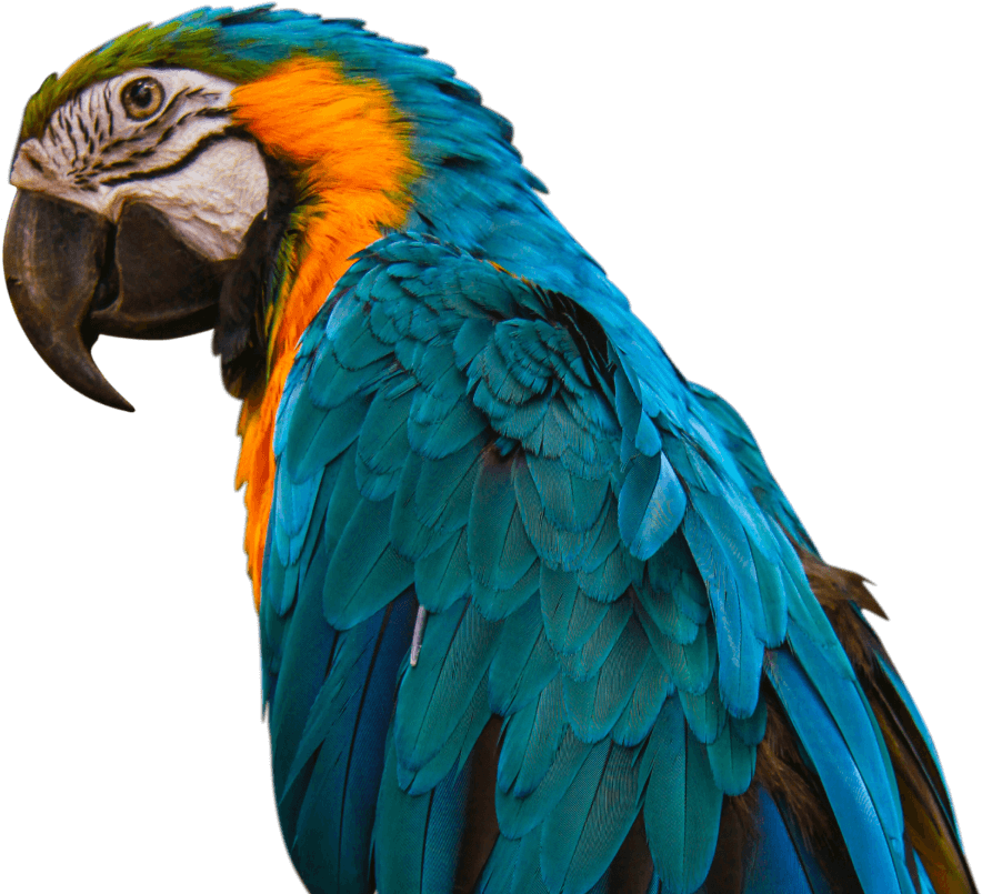 Bird Call to action parrot