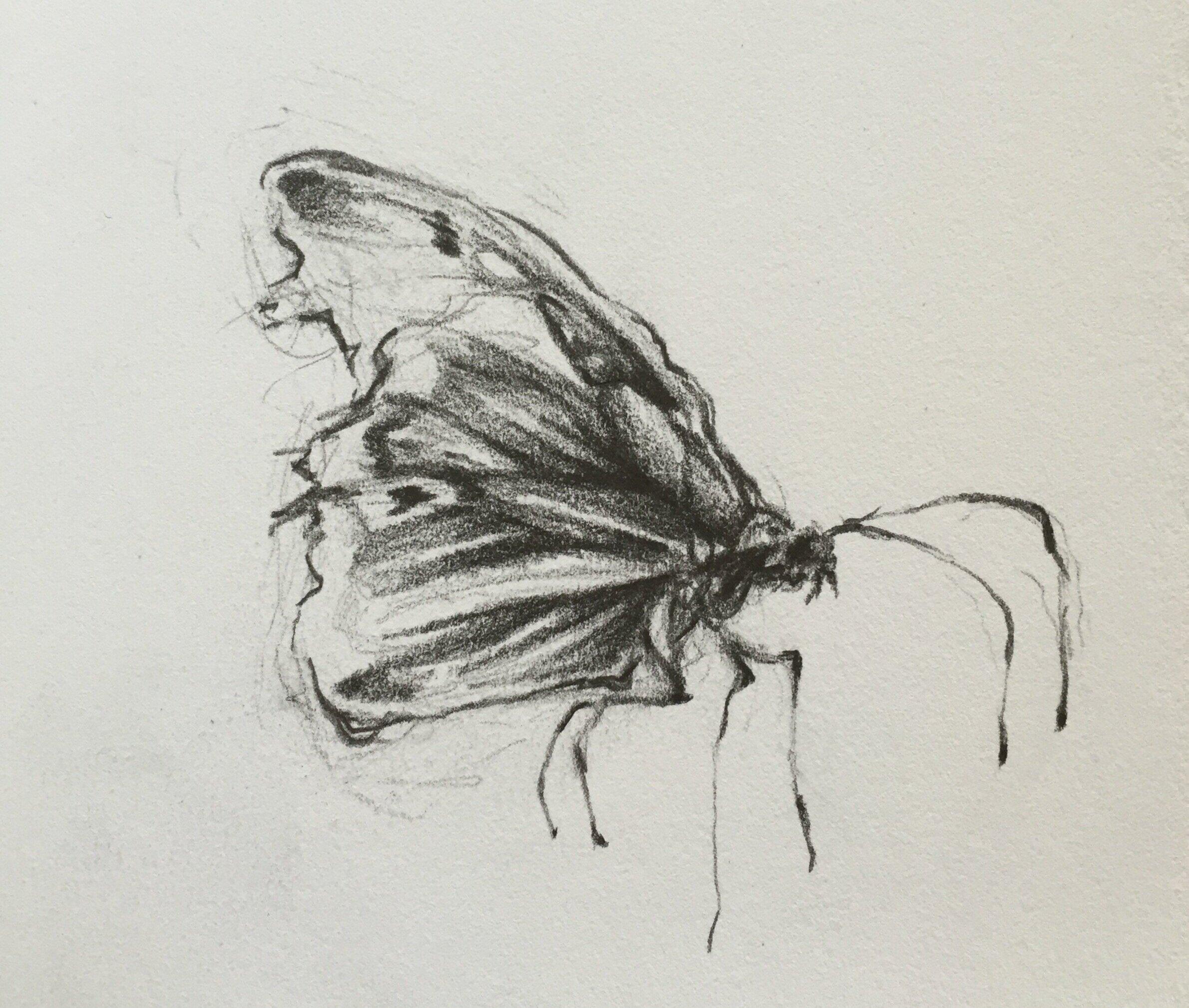 Drawing by  Samantha Jean Kosakowski