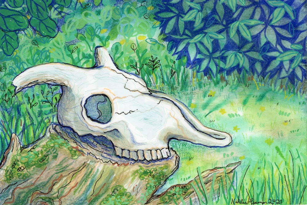 Illustration of a sheep skull with worn horns sitting on a stump. Grasses and bushes suround it.