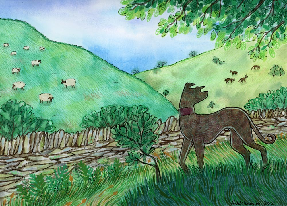 Illustration shows a dog standing on a small hill looking out to the distance. In the background are rolling hills with sheep grazing.