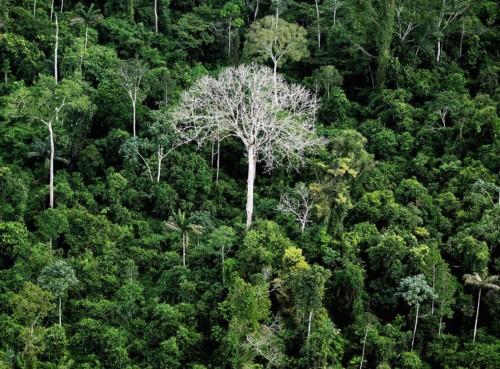 L'IA en soutien des forêts