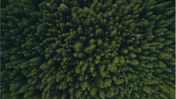 A view of a green edge