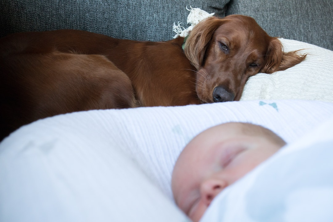 baby and dog sleeping near each other