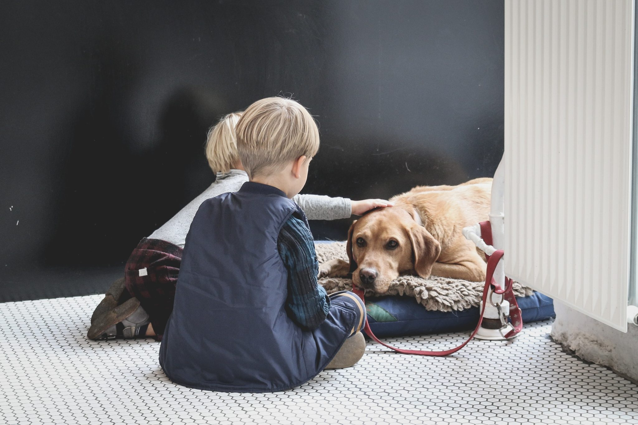 Two kids looking at a dog