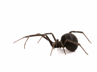 Common Spiders in Southern California That Harper Pest Control Can Control.