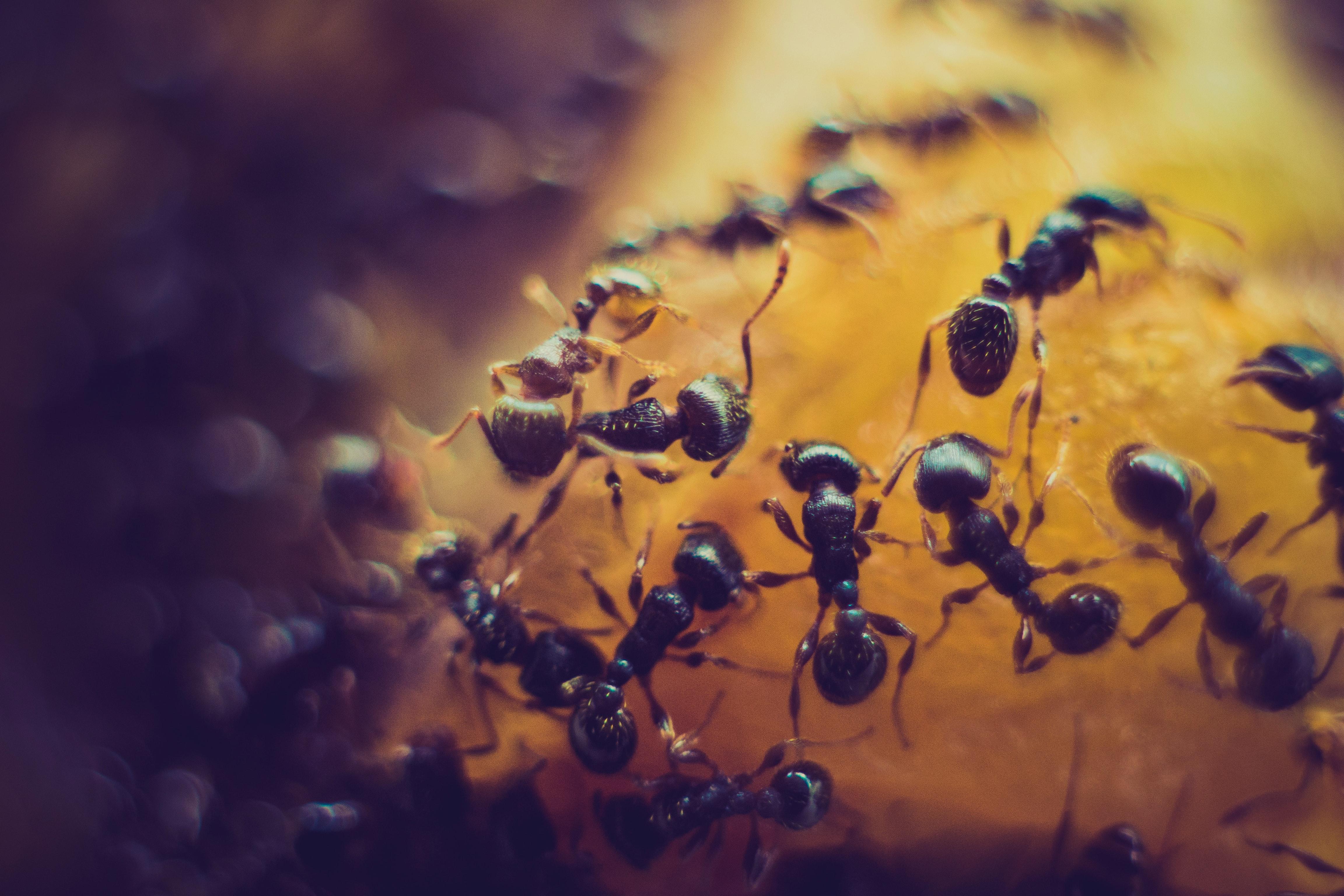 Ant Control Orange County