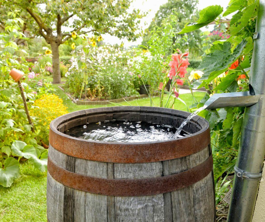 Barrel collecting rainwater