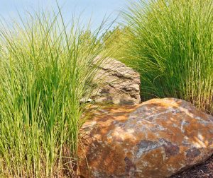 Succulent grasses on a rocky hill