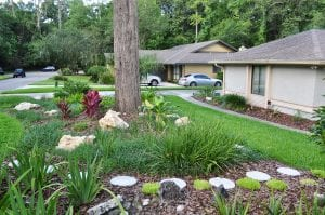 Landscape design with Hawaiian Ti, mulched beds, textured grasses