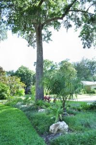 Tropical elements in a landscape design with large north florida trees
